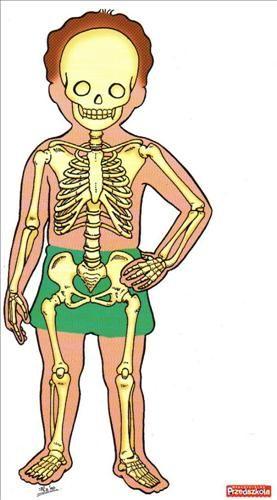 Lidská kostra v lidském těle. O conhecimento de corpo e sua estrutura desenvolvem o esquema e imagem corporal, desde que seja trabalhado no concreto também.