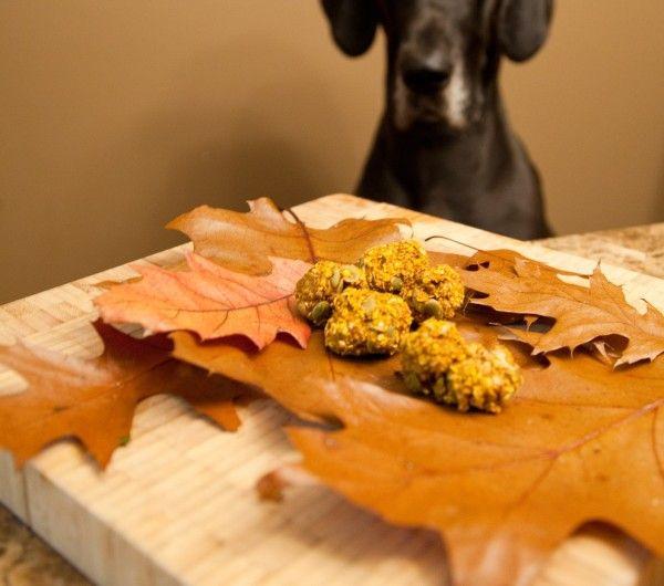 dolcetti autunnali per cani con zucca e cannella