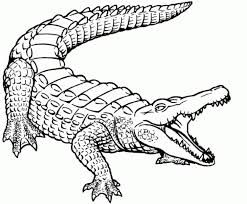 Résultat De Recherche D Images Pour Drawing Crocodile Flat Color
