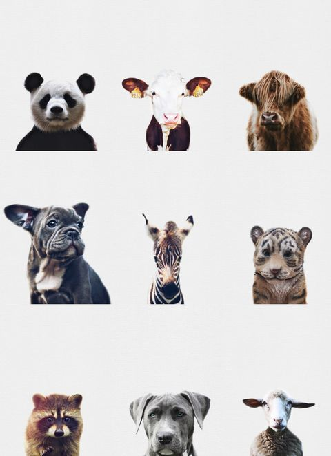 Nursery Art   Animal Prints available for download at diywallprints.store
