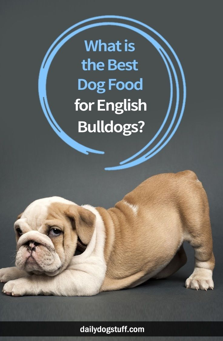 What Is The Best Dog Food For English Bulldogs Dog Food Recipes