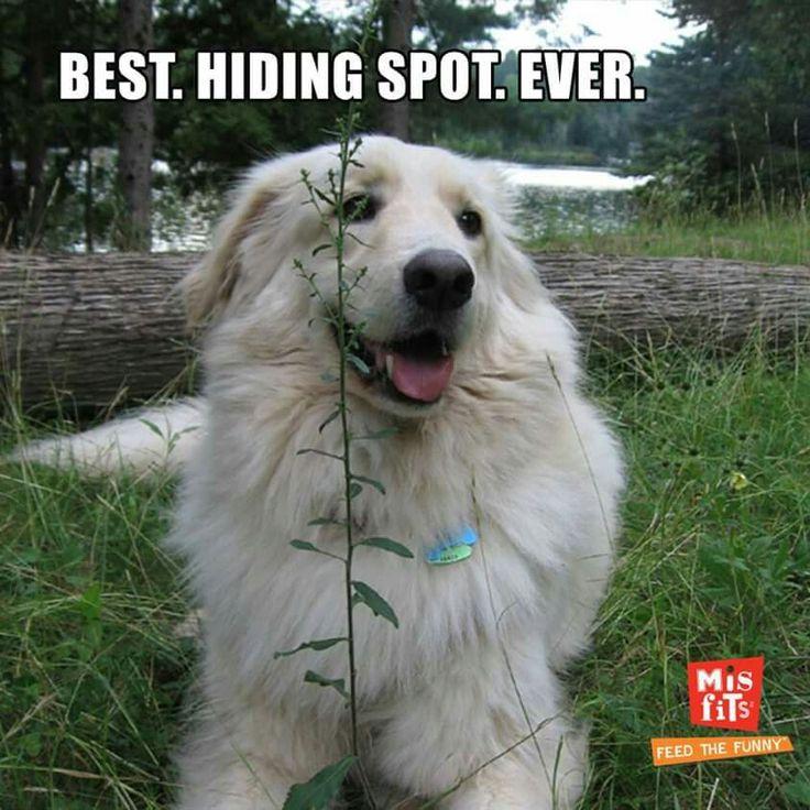 Best Hiding Spots Whiteout: Best. Hiding Spot. Ever