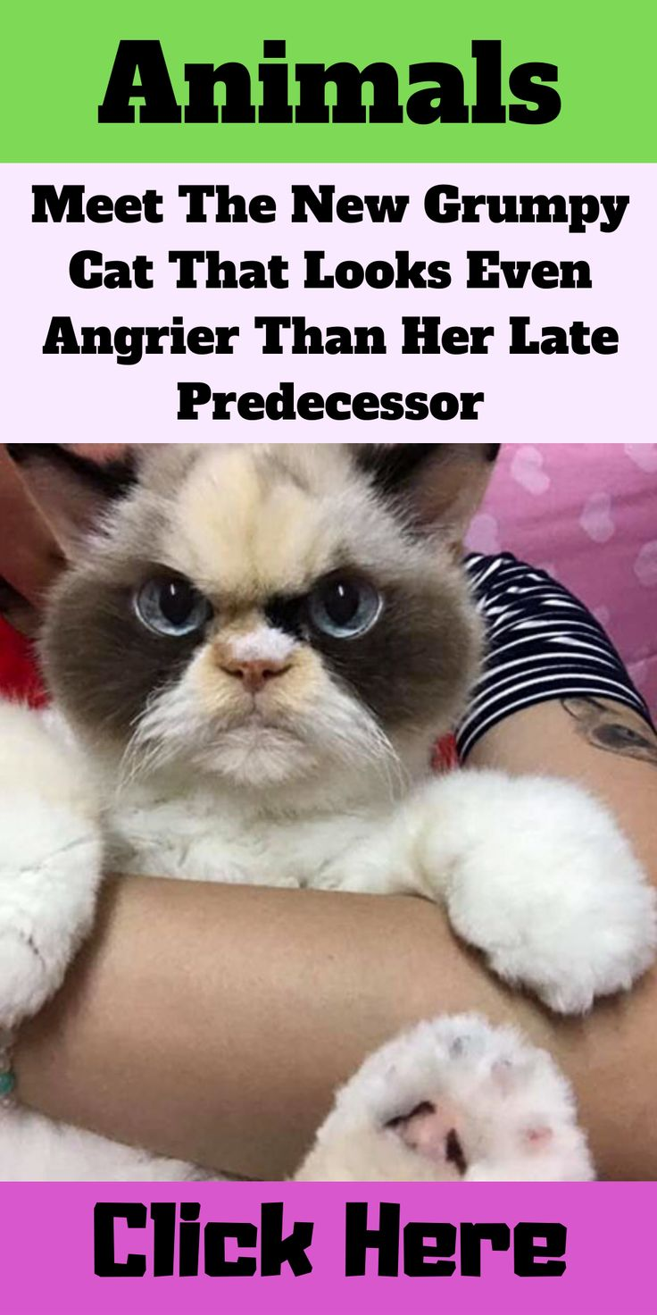 Meet The New Grumpy Cat That Looks Even Angrier Than Her