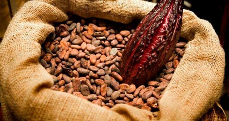 El cacao retrasa avance diabetes tipo 2