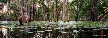 Image result for australian wetlands