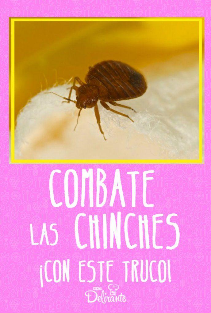 Combate Las Chinches De La Cama Con Este Remedio Casero Con