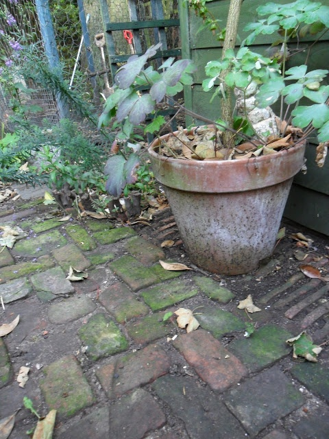 Bohemian Path Tarot: 31 Best Brick Garden Path Images On Pinterest