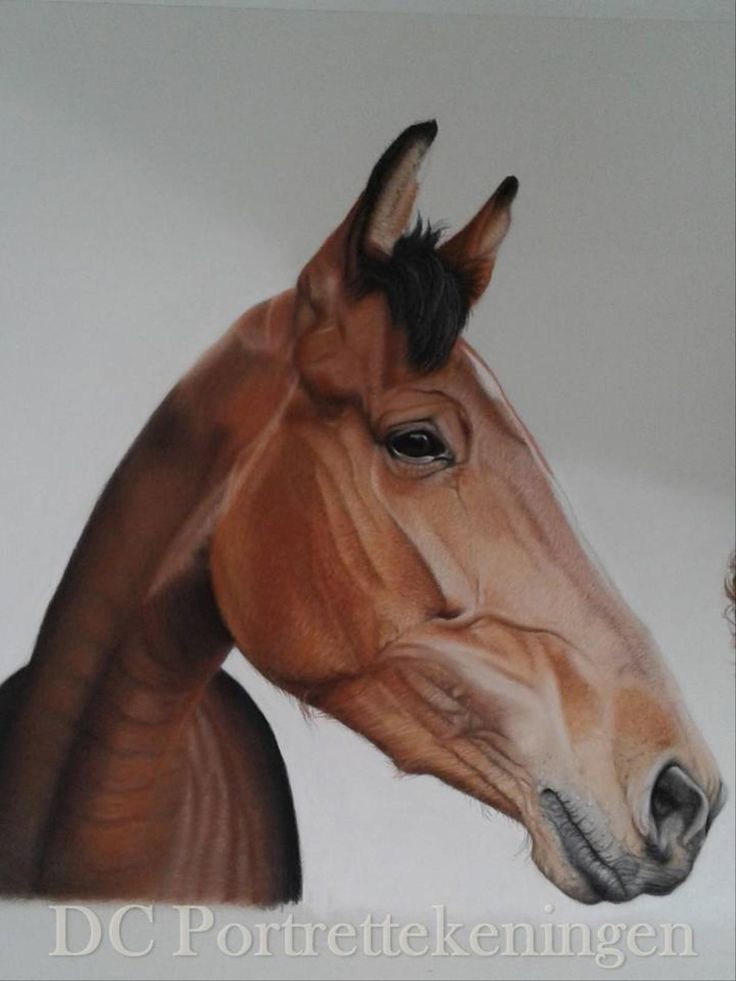 """""""Horse Faniella"""" realistic portrait drawing made with pastelpencils and pastelchalc"""