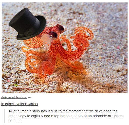 Modern technology. - Imgur  Super cute, now if only we could train them to actually wear little top hats...