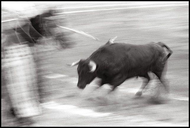 A PEU: A favor dels toros