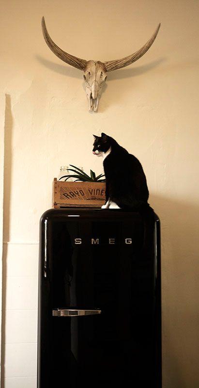 Black cat on black Smeg fridge.