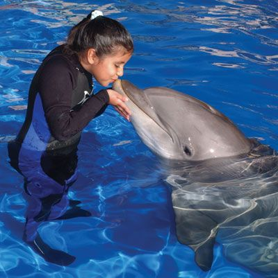 170 best My Life Dolphins images on Pinterest Dolphins, Orcas - marine mammal trainer sample resume