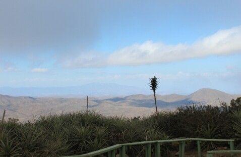 Reserva Nacional Fray Jorge, Chile.