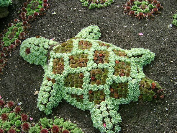 Succulent turtle!  my grandson would love this!