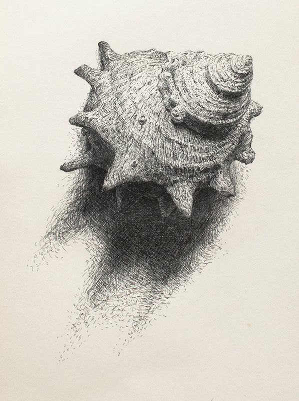 "Pen artist Sam Kim | ""Shell1"" | Pen drawing | 2012"