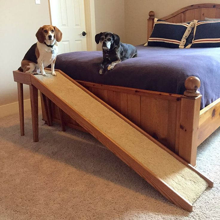 Give Your Pup a Lift Check Out the Best Dog Stairs and