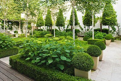 THE GLASS HOUSE, PETERSHAM. ARCHITECTS TERRY FARRELL PARTNERS. GARDEN DESIGN BY SALLIS CHANDLER: FORMAL GARDEN WITH CLIPPED BOX AND BAY, HYDRANGEA 'ANNABELLE' , BETULA JACQUEMONTII