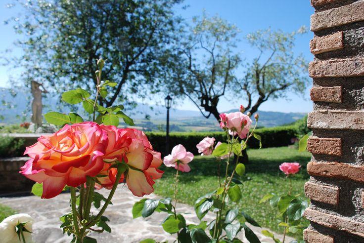 roses from Villa Dama