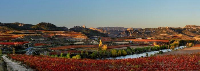 """Julio Grande, gerente de la Ruta del Vino Rioja Alta: """"Hoy la apuesta por el enoturismo es clara y, en nuestro territorio, universal"""" https://www.vinetur.com/2014122217777/julio-grande-gerente-de-la-ruta-del-vino-rioja-alta-hoy-la-apuesta-por-el-enoturismo-es-clara-y-en-nuestro-territorio-universal.html"""