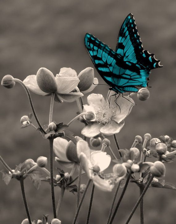 Black and white purple butterfly on flower wall art matted picture home decor like