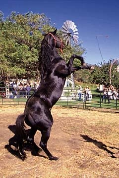 """Beauty"" in the movie Black Beauty. Docs Keepin Time (AQHA) had a few other note worthy parts.... as ""Black"" on The Adventures of the Black Stallion television show and as ""Gulliver"" in the Horse Whisperer."