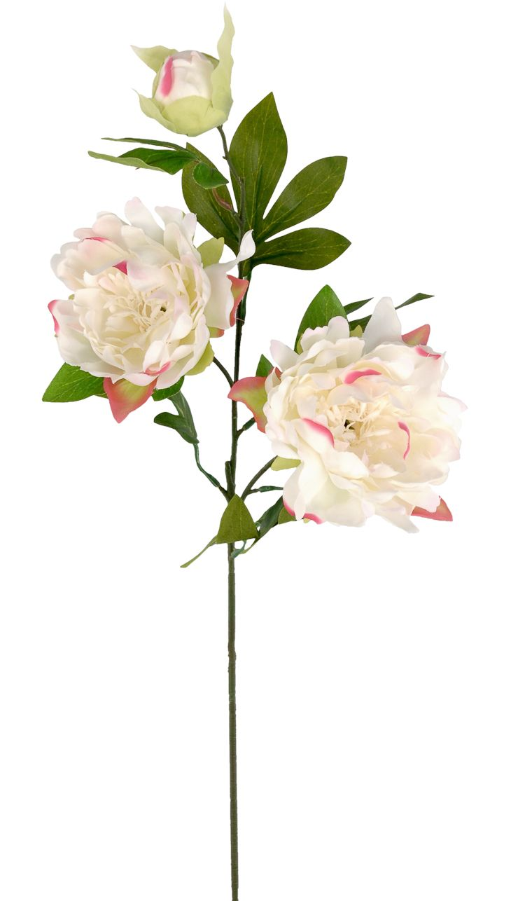 Top 25 best silk flowers wholesale ideas on pinterest buy dandy peony to blooms cream silk flowers by tapscotts wholesales silk floral products since dhlflorist Choice Image