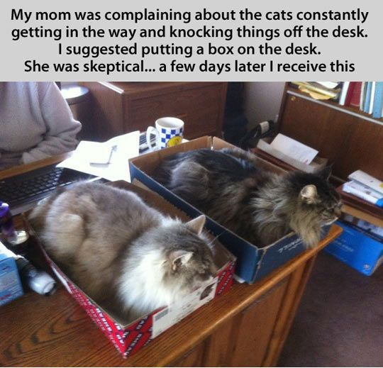 The infallible cat trapu2026 & Best 25+ Cat traps ideas on Pinterest | Itu0027s a trap meme Funny ... Aboutintivar.Com