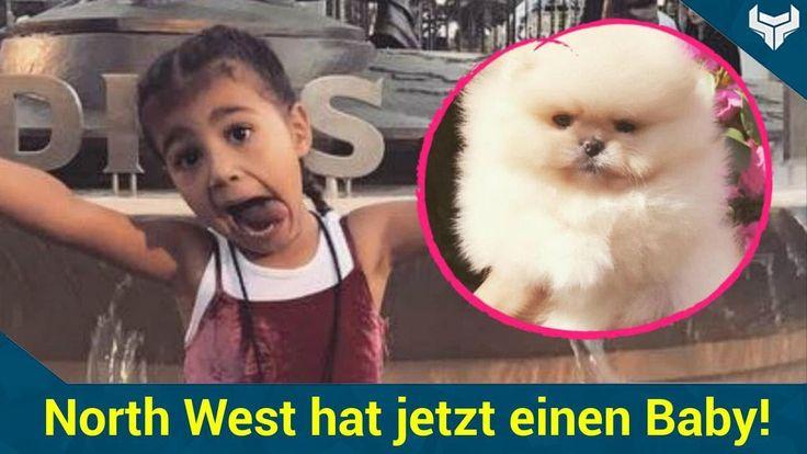 Mini-Promi-Dame North West ist jetzt stolze Hundebesitzerin! Am 15. Juni wird die Tochter von Reality-Berühmtheit Kim Kardashian (36) und Rapper Kanye West (40) süße vier Jahre alt. Eins ihrer Geschenke: ein flauschiger Welpe. Doch der kleine Knirps hat immer noch keinen Namen.   Source: http://ift.tt/2stugHq  Subscribe: http://ift.tt/2sjGq7b Knäuel: North West hat jetzt einen Baby-Hund!