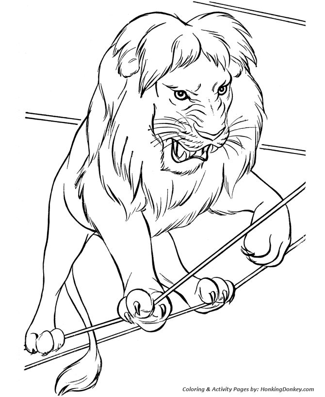 Circus Animal Coloring Page Lion Pages Featuring Lots Of Performing Animals And