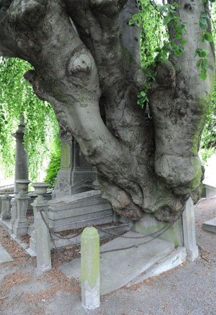 Tree growing out of a grave