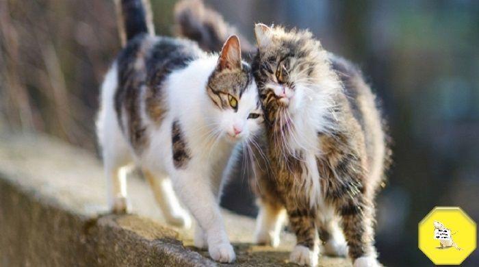 Una multa se non sterilizzi il gatto, la proposta shock contro i randagi