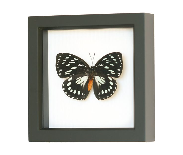 The 30 best Real Framed Butterflies images on Pinterest ...