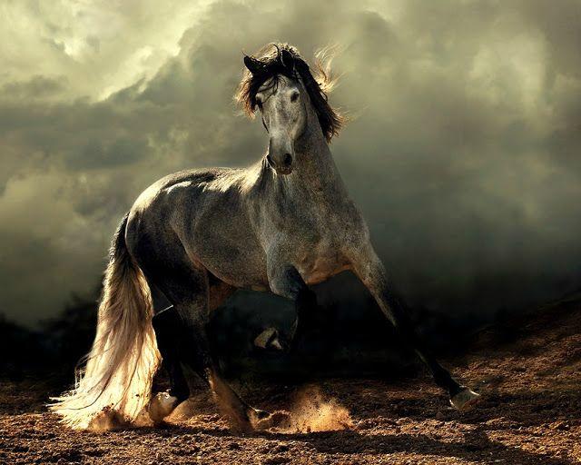 Beautiful Horses by Wojtek Kwiatkowski - 1
