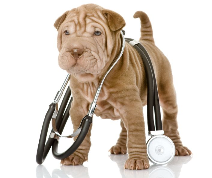 How to Check Your Dog's Vital Signs