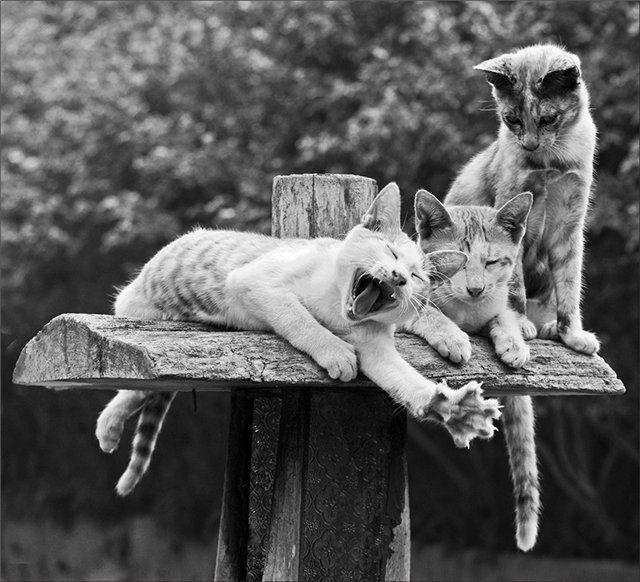 http://www.comparethebigcat.co.uk/insurancequotes/lifestyle/cheappetinsurancecomparison cat insurance