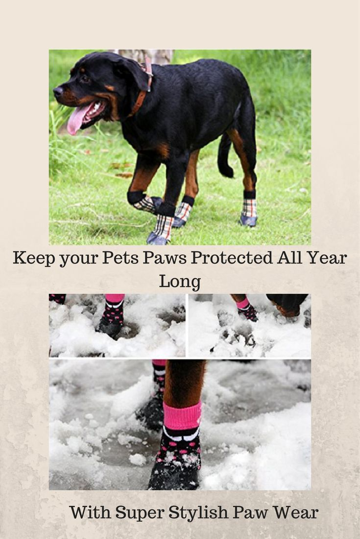 Fashion for Pets Snow boots for dogs, rubber boots for dogs paws, protective boots for dogs, running boots for dogs, rain boots for dogs, boots for dog paws, boots for dogs paws, boots for small dogs, dog boots for hiking, boots for dog, winter shoes for dogs, winter safety for dogs, best winter shoes for dogs, cute dog shoes, dog shoes for winter, best dog shoes, designer dog shoes, waterproof shoes for dogs