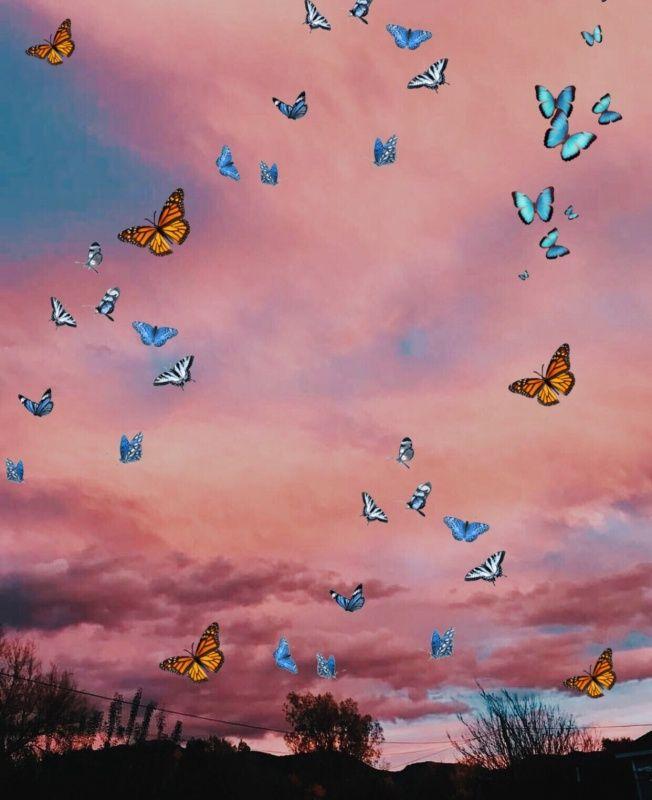 Vsco Joniklemchuk1 Iphone Background Wallpaper Butterfly Wallpaper Iphone Angel Wallpaper