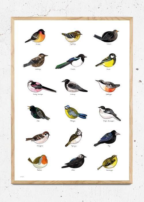 Forskellige danske fugle fra have og skov. Finurligt håndtegnet og malet med flydende tusch og derefter trykt som plakat. Trykt på 200g offset papir.