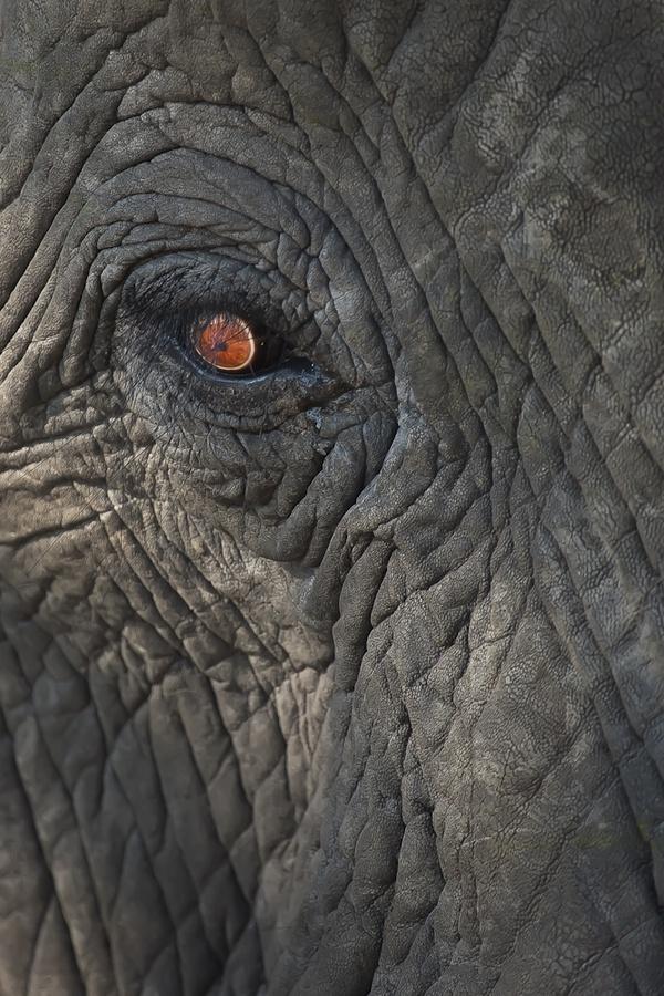 online store 0b4a2 c32f0 ... 296 best Elephants V2 images on Pinterest Board, Distance and Elephant  elephant skin patterns ...