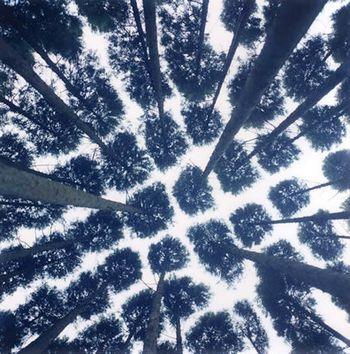 through tree tops  ♦ .. Rinko Kawauchi ..
