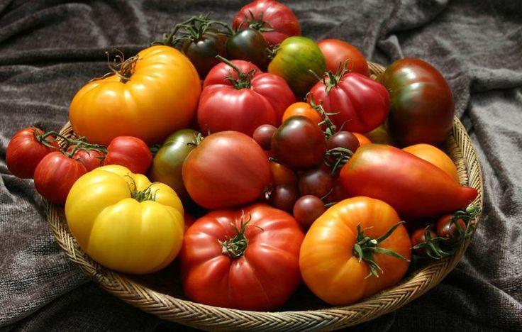 Come e quando piantare i pomodori