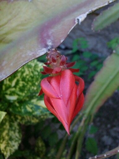 Flower of the cactus.
