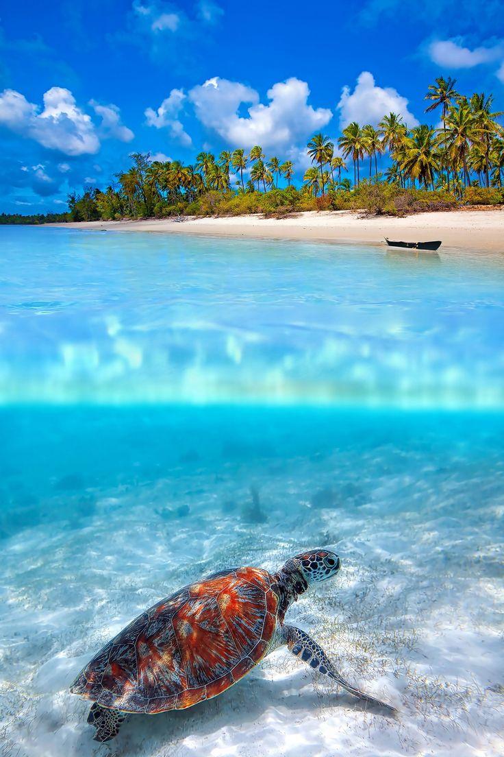 Mafia Island is part of the Tanzanian Zanzibar Archipelago, together with Unguja, Pemba and Latham Island.
