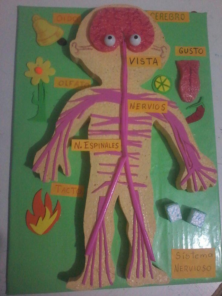 Maqueta sistema nervioso                                                                                                                                                                                 Más