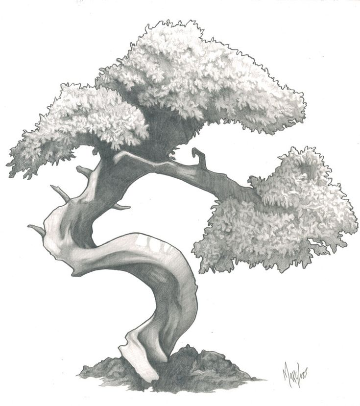 Bonsai by marc-mcfathead on DeviantArt