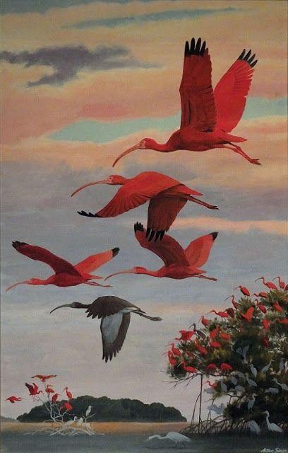 Ennyi: Arthur Singer (American, 1917-1990) - Flying Scarlet Ibis (Gouache on canvas) - A skarlát ibis (Eudocimus ruber) vándor rendkívüli színárnyalataival… szerencsére most már a világ minden táján védett... (Németh György)