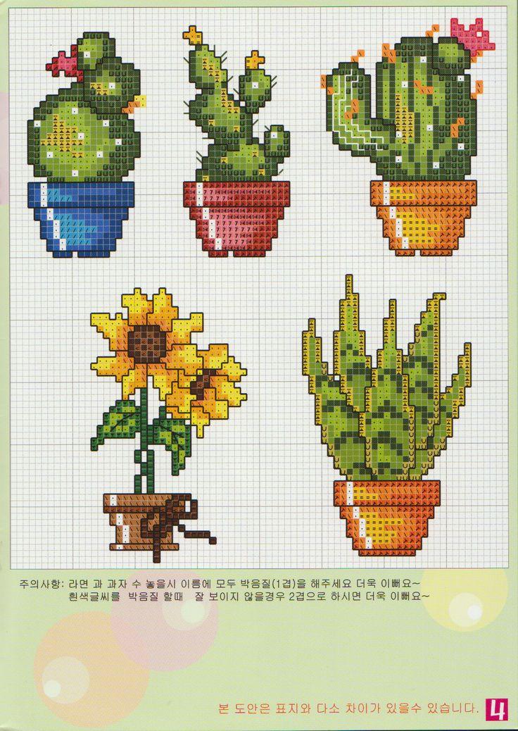 Çiçek kaktus
