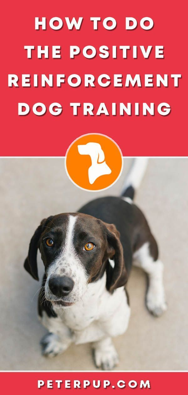 How To Find A Good Dog Trainer Dog Trainer Positive Dog
