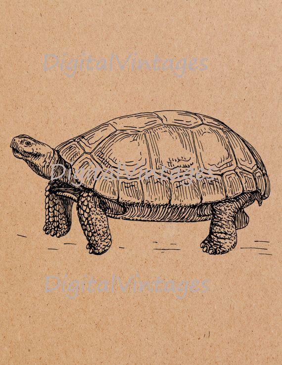 tortoise drawing for pinterest - photo #5