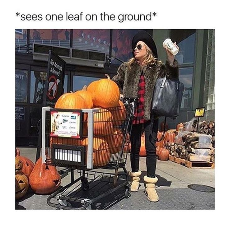 Me... Except that it's still super hot here and leaves haven't started falling yet, so it's more like *Starbucks starts serving the pumpkin spice latte*